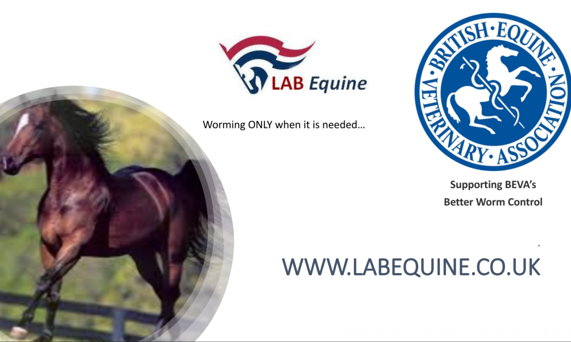 LAB Equine